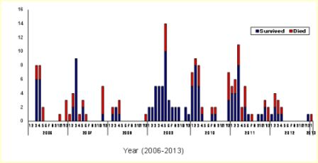 Avian influenza in Egypt, 25 February 2013